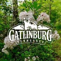 Enjoy Tennessee Life in Gatlinburg!